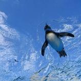 『サンシャイン水族館の年間パスポート完遂!一年間お世話になりました。』の画像