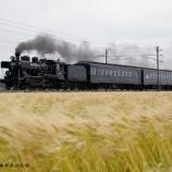 『▲SL人吉 麦畑を疾走 』の画像