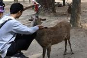 【国の天然記念物】奈良のシカの胃から4.3kgの「ポリ袋」 観光客増加で悲劇