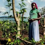 『パッションフルーツ生産でドロップアウトした女子の収入向上(ウガンダ)』の画像
