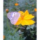 『蝶と花』の画像