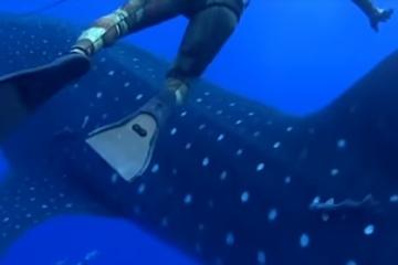 【恐怖】ダイバー「振り向いたら10mのサメがいた」動画が怖すぎる・・・・・