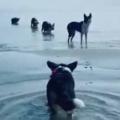 4匹のイヌがじっとしていた。そこに1匹がゆっくり近づいて行く。3、2、1… → わ~っ!!