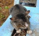 【画像】会いたいよ…亡くなった主人のお墓のそばで1年間も暮らし続ける猫が話題に