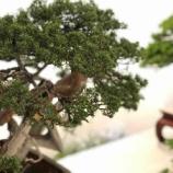 『戸田朝市のお手伝い。その後、戸田市文化会館で盆栽&フラワーアレンジメント展を堪能!』の画像