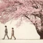 『♪桜♪』の画像