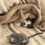 『恋愛運を用いた戦い方 ー猫も実践する『好き』の運用ー』の画像