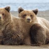 『【不思議】クマって何故か可愛いイメージあるよね』の画像