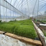 『陸稲と半農半X』の画像