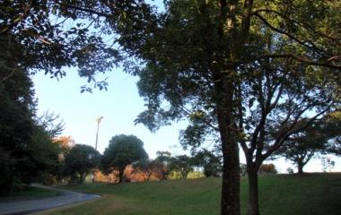 『秋色散歩』の画像