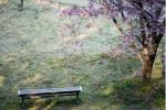 交野の街は、桜の宝庫 ~交野さんぽ㉗~