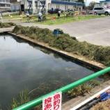『戸田ボートコースに水草が異常繁茂しています。大きな魚の姿もありました。』の画像
