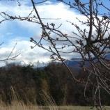 『テーブルつくり・辛夷と山』の画像