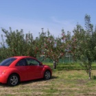 『おしゃれなリンゴ園』の画像