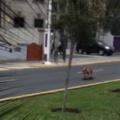 【イヌ】 見物人も思わず笑っちゃう。道を上手にUターン♪ → スケボー犬はこんな感じ…