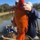 【画像】アメリカの湖で発見された巨大金魚がこちら…これはデカイw