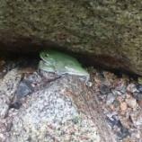 『【写真ありまーす】山ガールだけど登山中に見つけたカエルの名前教えて(※画像あり)』の画像