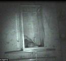 【恐怖】呪われた人形が深夜に動く様子がはっきりと映像に収められる!