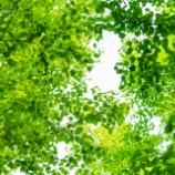『緑の街A green city.』の画像