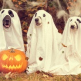『事故物件には住むな!っていうけど幽霊なんて本当に出るの?』の画像