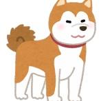 秋田犬、二回目の予防接種に怯えてしがみついて離れないwwwwwwwwwww