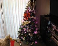 『12月ですね、早めのクリスマス準備』の画像
