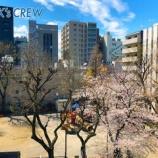 『平成から令和へ!さくらが咲く季節。当社にも新入社員が入社しました。』の画像