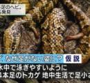 「4本足のヘビ」の化石を発見 トカゲ→ヘビの進化を裏付ける成果