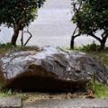 秋雨に 打たれて耐える 石ありき