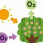 【朗報】トヨタ、植物の光合成を上回る『人工光合成』に成功! もう植物なくても大丈夫だな