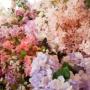 【シンガポール】 Cafe De Nicole's Flower カフェドニコルズフラワー
