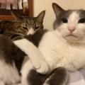 人と寝る・猫と寝る・どちらもとも寝る