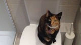 猫がトイレでうんこする度に褒めてたら・・・