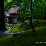 『濡れた苔Wet moss.』の画像