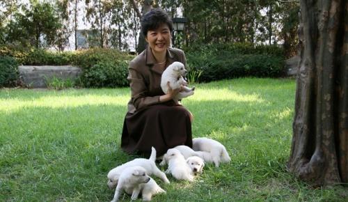 【韓国の反応】 朴槿恵が飼い犬9匹を置き去り