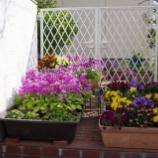 『3月の庭の花;東大和市』の画像