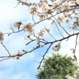 『春は出会いの季節。』の画像