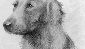 ヒトラーが描いた犬の絵wwwwwww