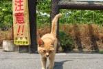 『猫』は市内全域に生息している!~交野いきもの図鑑No.1~