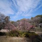 『続々・哲学堂公園の梅とその周辺 2020/02/15』の画像