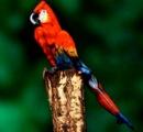 【画像】この鳥を見てビックリする奴いる?wwwwwwwwwwwwwwwwwwwwwwwwwwwwwwwwwwwwwwwwww