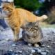 【猫】ネコは自ら人間と暮らし始めた? DNA分析で判明