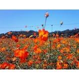 『花畑』の画像