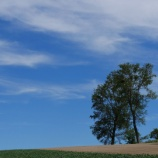 『【北海道ひとり旅】富良野・美瑛の旅『パフィーの木』どれがパフィーの木か未だに判りません』の画像