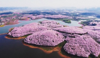 中国の桜の風景さん、ガチでスケールがデカ過ぎると話題にwwwwwwwwwwwww