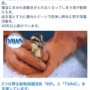 コストコ新登場の食器用洗剤DAWNが今だけ安い!手肌に優しい&野生動物を救っている洗剤なんです