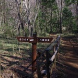 『3月末の東大和市立狭山緑地と孫と多摩湖散歩』の画像