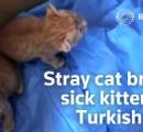病気で目が開かない子ネコを人間の病院に連れてきた母ネコの動画が話題に