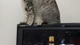 ワイのぬっこ、液晶テレビの画面を引っ掻く(※画像あり)