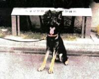 【悲報】行方不明者を捜索中、警察犬が逃走してしまうwwwwwwwwwwww